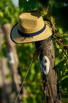 Free Hat On Vineyard Royalty Free Stock Images - 16297929