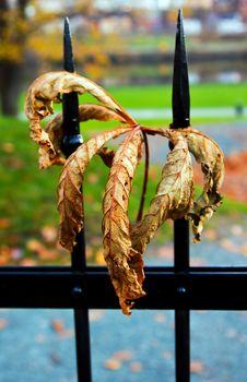 Free Autumn Leaf Royalty Free Stock Image - 16298216