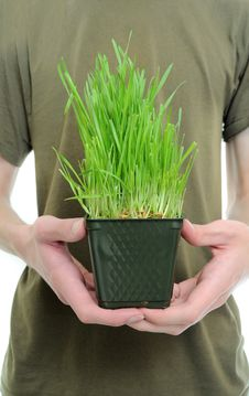 Free Holding Wheat Grass Stock Photography - 16299422