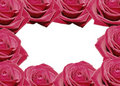 Free Rose Royalty Free Stock Photos - 1632758