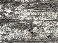 Free Bark Texture 2 Stock Photo - 1632930