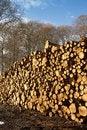 Free Woodpile Stock Photos - 1636553