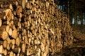 Free Woodpile Stock Photo - 1637920