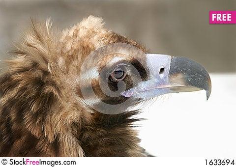 Free Eagle Sight Stock Images - 1633694