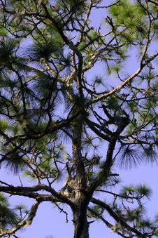 Free Tree Branches Stock Photo - 1631330