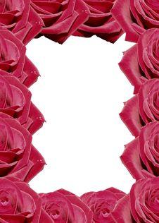 Free Rose Stock Photos - 1632783