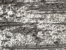 Free Bark Texture 2 Stock Photo - 1632930