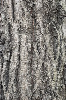 Free Bark Texture 3 Stock Photo - 1632940