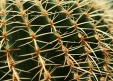 Free Cactus Stock Images - 1632944