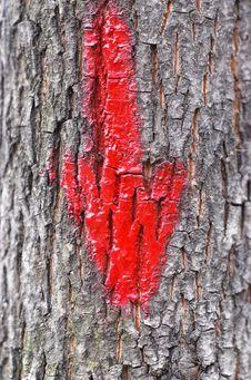 Red Arrow On Tree Bark Royalty Free Stock Photos