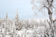 Free A Quiet Winter Frozen Forest Stock Photography - 1633652