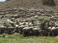 Free Flock Of Sheep Stock Images - 1633784