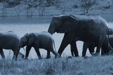 Free Full Moon Elephant Herd. Stock Photography - 1633792