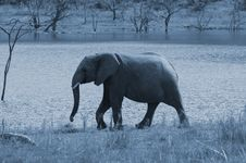 Free Full Moon Elephant. Stock Photography - 1633822