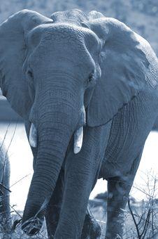 Free Full Moon Elephant. Royalty Free Stock Image - 1633836