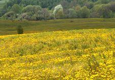 Free Spring Landscape Stock Image - 1633841