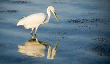 Free Heron Stock Images - 1635724
