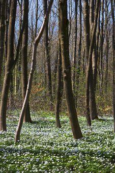 Free Springtime Royalty Free Stock Photos - 1636018