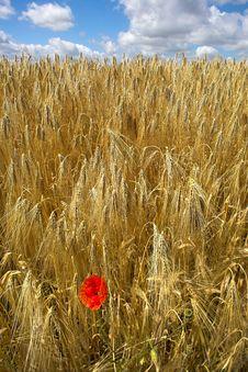 Free Harvest Royalty Free Stock Photos - 1636108
