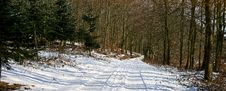 Free Forest In Wintertime Royalty Free Stock Images - 1636469