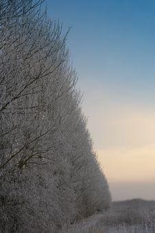 Free Winter Royalty Free Stock Photo - 1636785