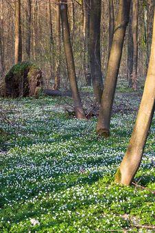 Free Springtime! Royalty Free Stock Image - 1636846