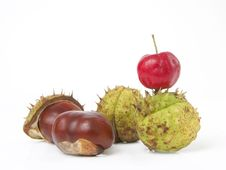 Free Chestnuts And Red Crab Royalty Free Stock Photography - 1636937