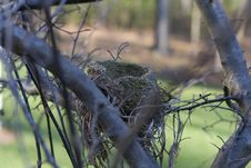Free Bird Nest Stock Photos - 1637723