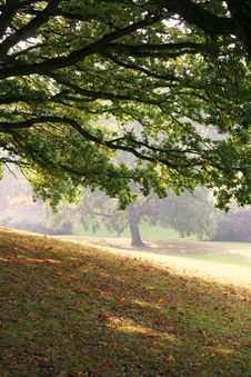 Free Autumn In A Park Stock Image - 1637951