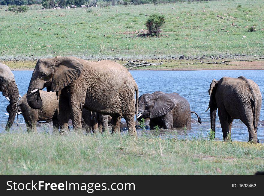 Playing Elephant Herd.