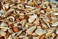 Free Detail Of Drying Autumn Mushroom Stock Photos - 16303363