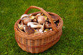Free Basket Of Fresh Autumn Mushroom Stock Photo - 16303490