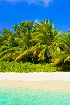 Free Sea, Beach And Jungle Royalty Free Stock Image - 16300786