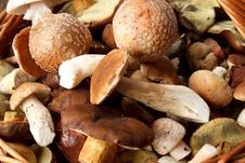 Free Detail Of Fresh Autumn Mushroom Royalty Free Stock Photos - 16303418