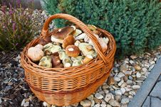 Free Basket Of Fresh Autumn Mushroom Stock Photos - 16303453