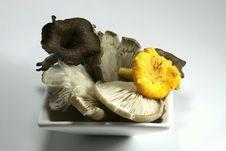 Mushrooms In Autumn Stock Photos