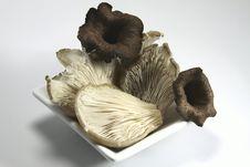 Mushrooms In Autumn Stock Images