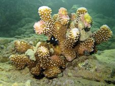 Free Coral With Little Fish Royalty Free Stock Photos - 16303808