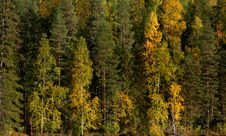 Free Forest In Autumn Royalty Free Stock Images - 16303839