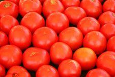 Free Tomatoes Royalty Free Stock Photo - 16303845