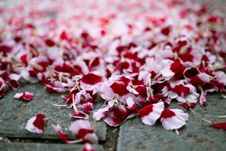 Petals On The Street Royalty Free Stock Photos