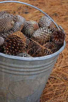 Free Pine Cones Stock Photos - 16306453