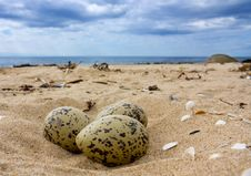 Free Eggs On The Beach. Stock Image - 16309141