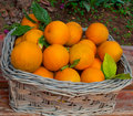 Free Basket Of Oranges . Stock Photos - 16318653