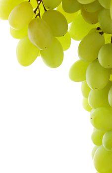 Free Grapes Stock Photo - 16311050
