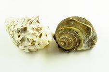 Free Shells Royalty Free Stock Photography - 16311627