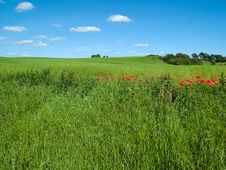 Free Beutiful Green Field Background Stock Image - 16313071