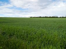 Free Beutiful Green Field Background Stock Images - 16313084