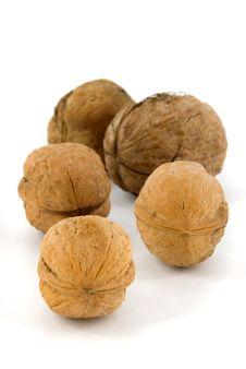 Free Walnuts Stock Image - 16313771