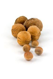 Free Wallnut And Hazelnut Royalty Free Stock Photos - 16313778